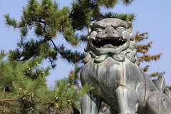 (  / Yorozuna) Tags: japan shrine hiroshima miyajima itsukushimashrine   itsukushima      hatsukaichi stoneguardiandogs foodogs    guardianliondogs