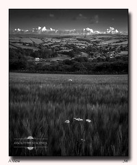 A View (jeremy willcocks) Tags: uk blackandwhite landscape mono corn view south devon fields hedges hams cowparsley jeremywillcocks iphone5se wwwsouthwestscenesmeuk