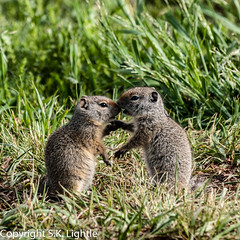 Did You Hear About..? (SKL_Photo) Tags: mormonrow state wyoming