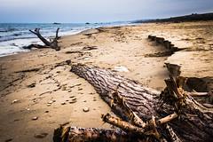 Tronco (SDB79) Tags: tronco mare sabbia riva molise oasi petacciato legno bagnato natura