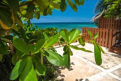 _JAM7435 (Jamil D750) Tags: jamaica smoked marlin sunny ocean beach oceanview view restaurant tropical blue sky waves nikon nikond750 green yellow orange stone