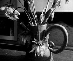 Dying flowers (mono) (pilechko) Tags: blackandwhite monochrome vase flowers dying contrast cropped