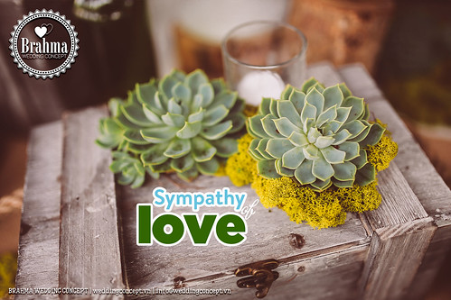Braham-Wedding-Concept-Portfolio-Sympathy-Of-Love-1920x1280-47