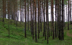 dbki coastal pines (kexi) Tags: green grass trees pines many coastal dbki poland polska pomorze pomerania canon june 2015 instantfave forest