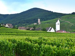 in the Alsatian vineyards (mujepa) Tags: vignoble vin katzenthal alsace clocher château wineck vineyards belltower castle