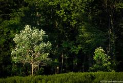 Trees in the Prairie (Jim Frazier) Tags: 2016 20160615cantignyphotowalk botanic botanicgarden botanicalgarden botanicalgardenspublic gardenmuseumhorticulture cantigny cantignypark dupage dupagecounty flowers gardens il illinois june park parks photoclass photography photowalk plants preserve summer trees wheaton workshop q3 prairie