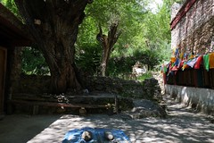 shrine (ababh) Tags: sichuan ganzizangzuzizhizhou easttibet khams danba prayerwheel corridor prayerflag shrine sacredtree machilusthunberii shade