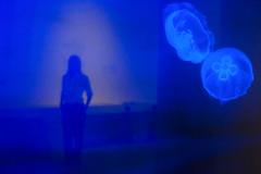 Mduse en lumire bleu (G. Lang) Tags: frau woman wasser deutschland germany karlsruhe water blau blue spiegelung reflection badenwrttemberg naturkundemuseumkarlsruhe sonyalpha7ii allemagne eau sonyilce7m2 rflexion femme girl fille quallen jellyfish mduse bleu