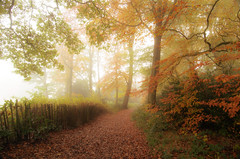 The mist beyond the path (SimonLea2012) Tags: wander walk foggy misty  exposure nikond7000 uk leaflitter magical atmosphere branches twigs morning day fog mist season fall westmidlands warleywoods woodland woods trees leaves path light gold red colour autumn