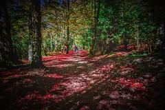 Octubre rojo (cesarpc1975) Tags: otoo rojo paisaje nature naturaleza aragn rbol arbustos hojas espaa nikon pirineos huesca