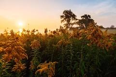 Gold or Blue? (Smaku) Tags: lakeontario horizon flower sunrise toronto landscape
