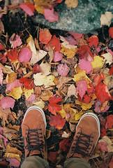 Red Carpet (Nsharp17) Tags: nikon nikonfe film 35mm kodak ektar ektar100 leaves fall autumn feet shoes vans trail vermont maple redmaple red