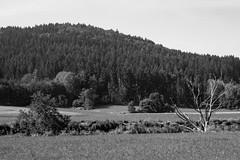 Valley scene (schauplatz) Tags: bayerischerwald bayerwald deutschland lamerwinkel urlaub landscape landschaft schwarzweis schwarzweiss blackandwhite blackwhite valley tal toterbaum deadtree hills