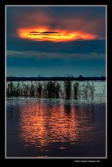 Senills a l'alba (Reeds at dawn) L'Albufera, l'Horta, Valncia, Spain (Rafel Ferrandis) Tags: senill albufera alba hdr eos7dmkii sigma150600contemporary