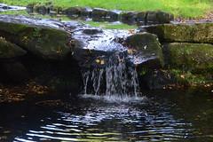 Fairy Glen, Sefton Park (pda87) Tags: nikon d3200 liverpool aigburth sefton park fountain water feature fairy glen