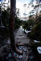 Crossing (Typemutha) Tags: road park wood travel trees shadow vacation favorite mountain holiday tree art tourism nature beautiful contrast forest john way landscape ma photography photo search bush artist artistic hiking path timber walk top unique fine review australian champion picture award australia hike best professional most journey shade excellent tasmania species outback prize eucalyptus aussie favourite popular cradle voted highest outstanding viewed the rated reviewed prestigious darqhorse