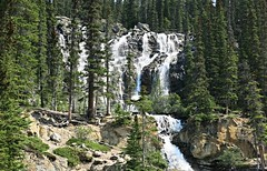 Jasper NP ~ Tangle Creek waterfall (karma (Karen)) Tags: canada topf25 waterfalls alberta 4summer canadianrockies jaspernp cmwdgreen tanglecreek canadanationalparks icefieldspkwy