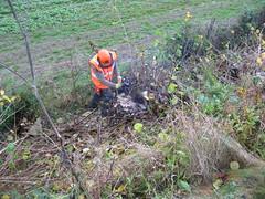 Stage 2 (Tanllan) Tags: railroad light heritage wales train fun volunteers chainsaw railway tourist steam stump cutting gauge narrow preservation llanfair welshpool wllr oakbeechvalley