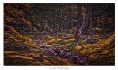 Morning in the Glen (Dave Whiteman - AU) Tags: horse landscape australia bluemountains glen newsouthwales megalong megalongvalley carlonsfarm packsaddlers carlonscreek