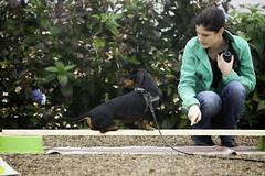 IMG_7100_B&B_KAMIEL (pieterbie) Tags: dachshund kamiel dogsinmind