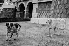 Kefalari (Dimitris Zacharakis) Tags: bw dog dogs animal contrast 35mm argos kefalari