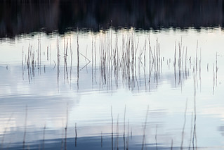 Grass in the Lake