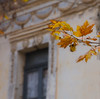 detail (Simos1968) Tags: autumn detail window leaves place bokeh abadonded