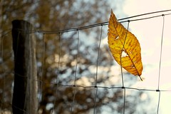 Foglia (_DaleOne_) Tags: autumn leaf foglia autunno