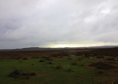 New Forest (tom_2014) Tags: park uk travel winter wild england sky english forest landscape nationalpark europe view hampshire heath common newforest lyndhurst gorse
