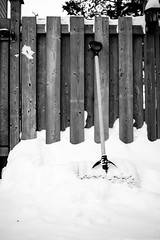 1D0A1142 (mjkeenanphotography) Tags: winter blackandwhite bw snow ontario canada cold ice canon backyard noiretblanc 7d 24mm everyday northern saultstemarie lightroom sault amature schwarzweissfotografie lightroom4 7dmark2 24efs