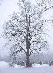 Mist (shumpei_sano_exp4) Tags: naturewatcher multimegashot