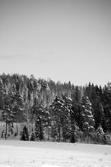 stone fire (Kalense Kid) Tags: snow forest landscape sweden fields skedvik