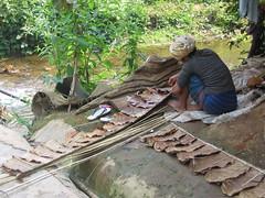 Drying Banana Leaves