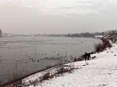 Monheim am Rhein Winter 2015 (KL57Foto) Tags: winter river germany am olympus nrw rhine landschaft rhein rheinland rhineland monheim 2015 monheimamrhein epm2 stadtmonheim kl57foto stadtmonheimamrhein