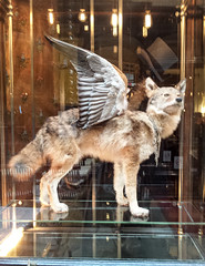 Reflecting on Paris-35 (rosalindreilly2011) Tags: reflections wings wolf tophat shopwindow windowdisplay