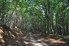 Sentiero illuminato (espositomichele4) Tags: laura tree nature alberi forest path natura monte sentiero albero calabria catanzaro foresta contessa madama jacurso
