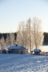 ice rime (Kalense Kid) Tags: trees winter house lake snow ice field landscape sweden backlit hummocks skedvik