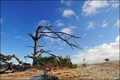 Hoge Veluwe (Fred van Daalen) Tags: arnhem thenetherlands veluwe otterlo gelderland hogeveluwe schaarsbergen hoenderlo