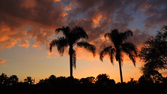 Tuesday March 10 Sunset (Jim Mullhaupt) Tags: pink blue sunset red wallpaper sky orange sun lake color reflection tree water weather silhouette yellow clouds landscape evening pond nikon flickr sundown florida dusk palm tropical coolpix bradenton p510 mullhaupt jimmullhaupt
