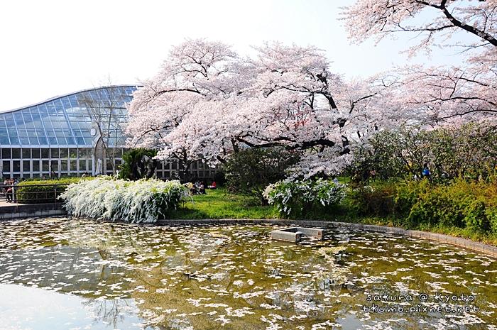 京都府立植物園 (9).jpg