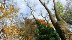 Autumn (Erich Hochstger) Tags: autumn trees sky brown tree green yellow branches herbst himmel foliage gelb treetrunk grn braun ste bltter bume baum bole baumstamm
