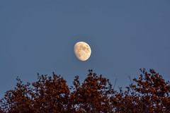 Autumn Moon (thomas.hartmann496) Tags: blue trees sky brown moon newyork tree fall leaves photo unitedstates troy astro luna astrophotography astronomy lunar rpi rahps rahp