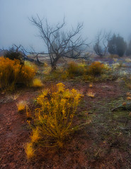 Foggy morning on the Colorado Plateau (Dennis Herzog) Tags: trees weather fog colorado desert wildflowers nationalparks coloradoplateau coloradonatioinalmonument