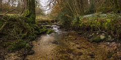 Snowdrop Valley Pano, Exmoor (RattyBoots) Tags: canon stream panoramic 7d snowdrops valentinesday exmoor 2015 canon1022 snowdropvalley ancientwoodlands polpariser stitchedinphotoshopcs6