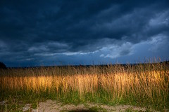 Storm approaching (Sarah Hina) Tags: stormfront stormclouds field grasses carheadlights drama trees dark dusk