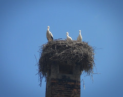 Storks (ivan-95) Tags: nest sky blue birds nature natureandnothingelse storks natgeo minimal rode ptice ngc outdoor