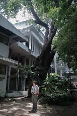 BIGTrees-Panon-Miti Ruangkritya (bigtreesproject) Tags: 66835548622 mitiruangkritya miti139hotmailcom mitimiticom wwwmiticom