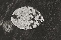 (Janshi -) Tags: primeval forest razula woods