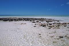 Stromatolites near Hamelin Pool in WA (Stefan Ulrich Fischer) Tags: travel seascape 35mm nationalpark outdoor oz australia slide scanned outback coastline analogue westernaustralia downunder kodakektachrome stromatolites minoltaxd7 hamelinpool