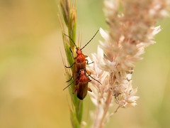 Love (tongim29) Tags: baguedallonge extensiontube insectbreeding